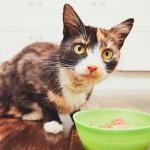 Qué premios le puedes dar a tu gato