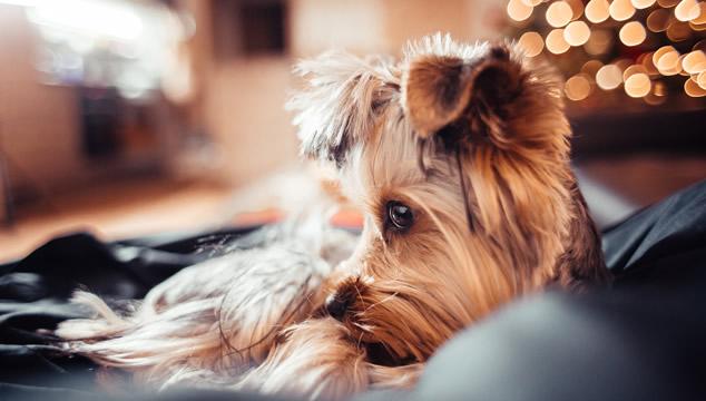 5 películas de perros que puedes ver en tu casa