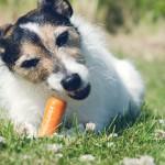 Qué premios le puedes dar a tu perro
