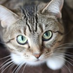 Lo que necesitas para el arenero de tu gato