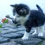 Los mejores nombres para tu gato