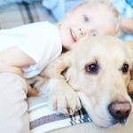 5 mascotas para niños
