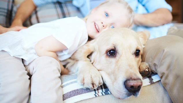 Labrador con niña
