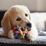 Consejos de higiene para gente que tiene mascotas