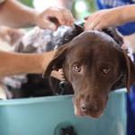 Lo que debes tener en cuenta al bañar a tu mascota