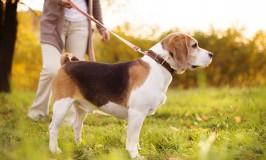 Consejos para dar una caminata con tu perro