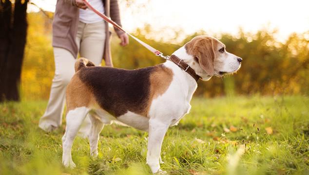 Perro caminando en parque