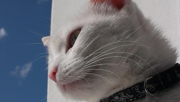 ¿Tienes un nuevo gatito en casa y no sabes qué nombre colocarle?