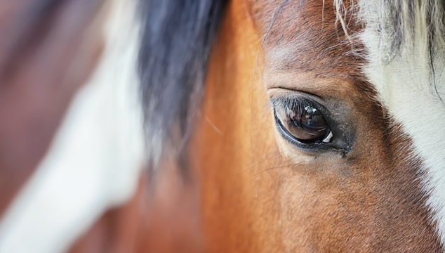 Peyo, el caballo terapéutico