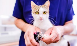 ¿Debo cortarle las uñas a mi gato?