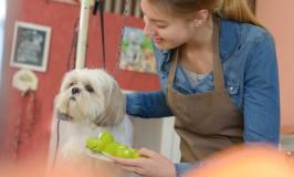 Razones por las cuales es buena idea llevar a tu mascota a una estética profesional