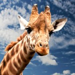 10 datos interesantes sobre las jirafas