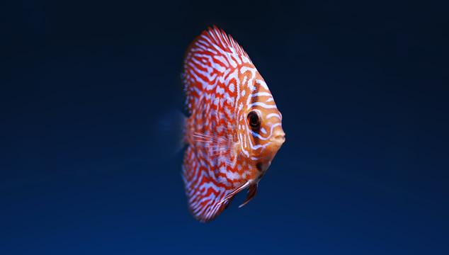 10 nombres padres para peces
