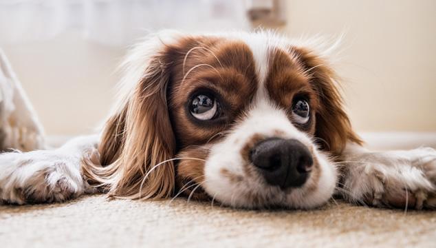 ¿Cuál es la mejor forma de limpiar las lagañas de tu mascota?