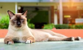 Los gatos y las pulgas