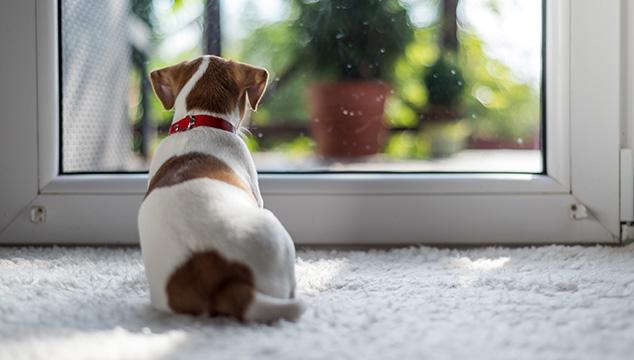 Cómo limpiar la orina de perro