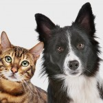 Diferencias entre perros y gatos como mascotas