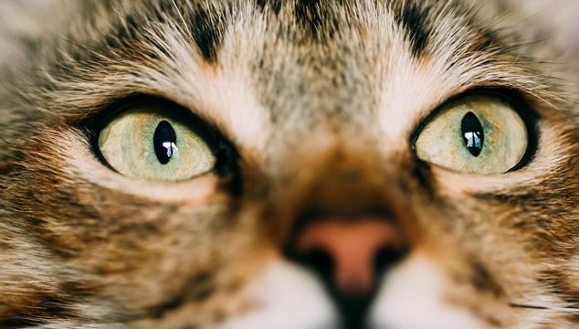 Lo que debes saber sobre los ojos de tu gato
