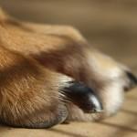 6 útiles tips para cortar las uñas de tu mascota