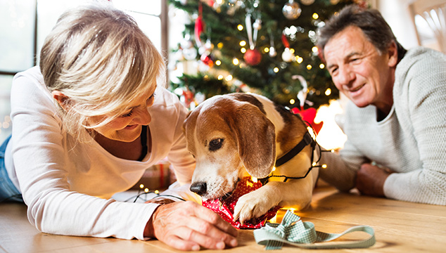 Qué regalarle a tu perro esta Navidad