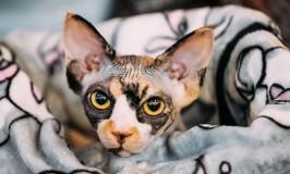 5 tips para cuidar a tu gato en temporada de frío