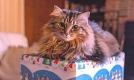 9 regalos para tu gato en esta Navidad