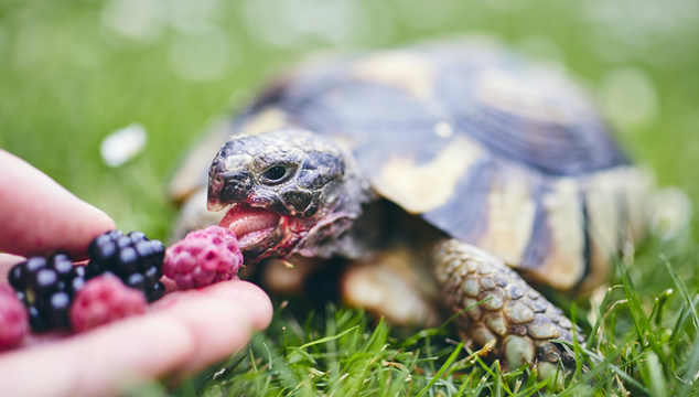 5 datos curiosos sobre las tortugas