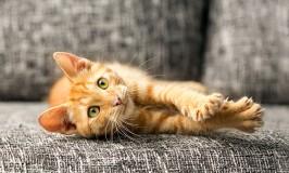 Diferentes opciones para el arenero de nuestro gato
