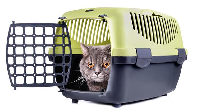¿Cómo transportar a mi gato?
