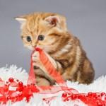 4útilestipspara esta navidad si tienes mascotas