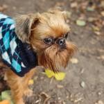 Consejos para mantener a tu mascota caliente en temporadas de frío