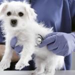 6 razones para llevar a tu mascota a una revisión médica de rutina