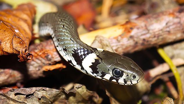 Puntos importantes para tener una serpiente como mascota
