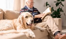 5 razones por las que las mascotas son buenas para los adultos mayores