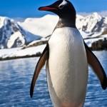 7 cosas que no sabías sobre los pingüinos