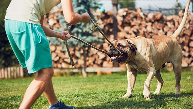 Juegos para entretenernos con nuestros perros en casa