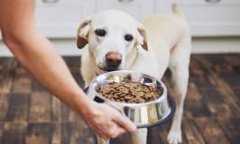 5 tips para cuidar a tu mascota del coronavirus (COVID-19)