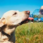 Cómo evitar los golpes de calor en nuestras mascotas