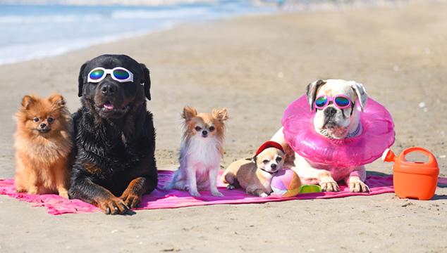 Las 13 razas caninas que sufren más por el calor