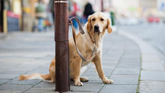 El abandono y la adopción de mascotas en tiempos de COVID-19