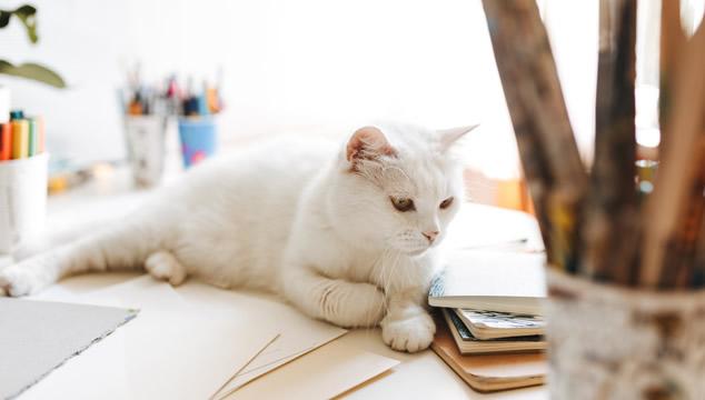 6 datos interesantes sobre los gatos