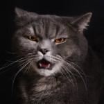 Reconoce 7 signos de estrés en tu gato