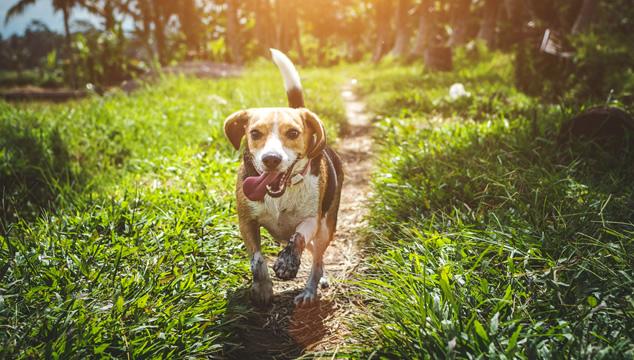Para qué es útil el olfato del perro