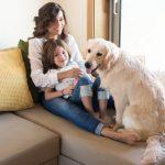 Cómo ser un dueño de mascotas responsable