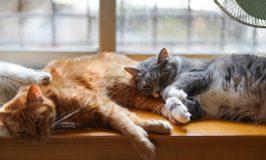 Las 13 enfermedades más comunes en el gato geriátrico