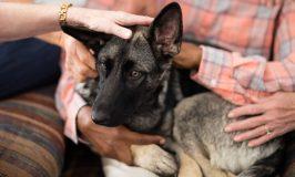 La confianza en perros