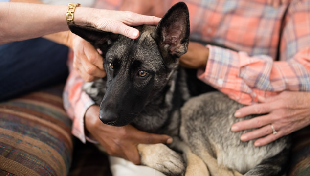 perro-desconfianza