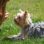 3 palabras muy útiles para controlar a tu perro