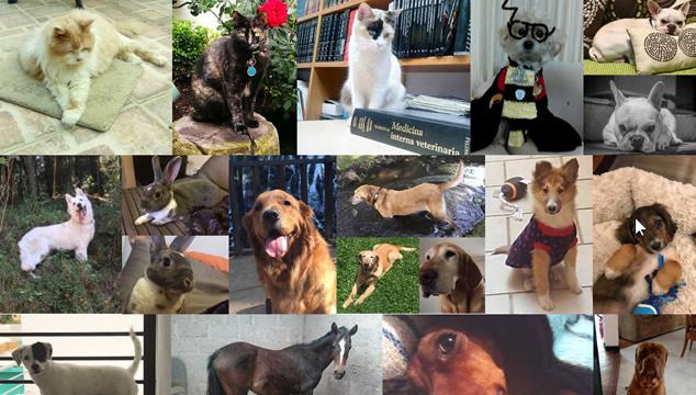 Envíanos la foto de tu mascota para publicarla en nuestra página web