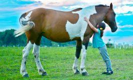 Lo qué debes saber de la terapia con caballos para niños y adultos
